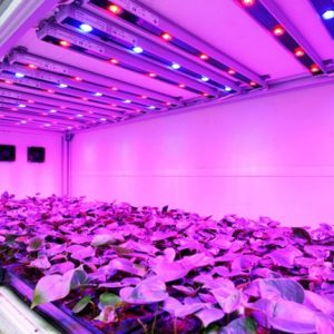 بررسی چراغ ها و لامپ ها ی گلخانه ای